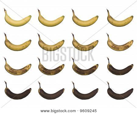 Banana in progress isolated towards white background poster