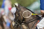 Polo-Cross horse rider player racket unidentified closeup abstract exciting equestrian sport. poster