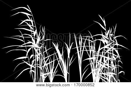 illustration with reed silhouettes isolated on black background