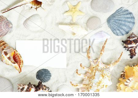 sea stars and shells an blank postcard on sands