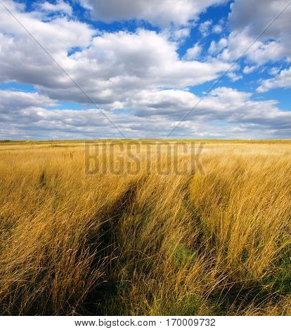 Autumn scenery with stubble-field.