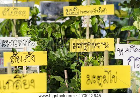 BANGKOKTHAILAND - 30 JANUARY 2017 : selling plant sign at market