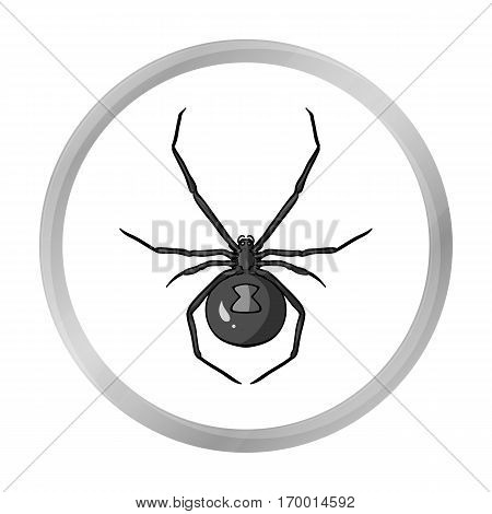Black widow spider icon in monochrome design isolated on white background. Insects symbol stock vector illustration.
