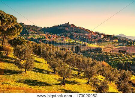 Casale Marittimo village olive trees countryside landscape in Maremma. Pisa Tuscany Italy Europe.
