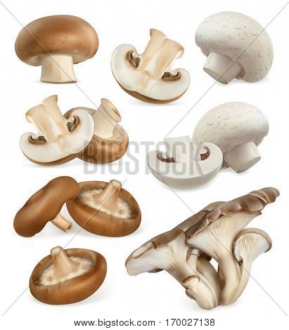 Edible mushrooms. Shiitake, oyster, cremini, white button. 3d vector icons set