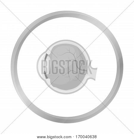 Eyeball icon in monochrome style isolated on white background. Organs symbol vector illustration.