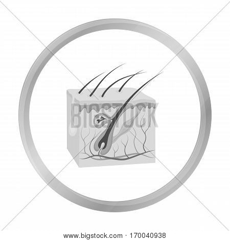 Skin icon in monochrome style isolated on white background. Organs symbol vector illustration.