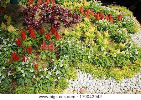 a well arranged carpet of green plants and flowering plants