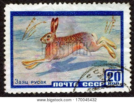 USSR - CIRCA 1959: Postage stamp printed by USSR with a picture of the European hare from the series
