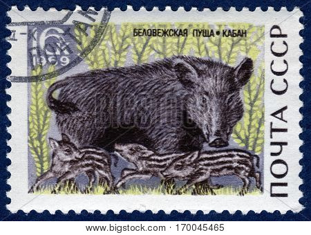 USSR - CIRCA 1969: Postage stamp printed in USSR with a picture of wild boar with piglets , from the series