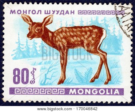 MONGOLIA - CIRCA 1968: Postage stamp printed in Mongolia shows image of a little deer, from the series