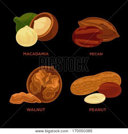 Nut set. Ripe nuts and seeds vector illustration. Various nuts. Highly detailed nut icons walnut, hazelnut, cashew, peanut, pecan. Vector Illustration.