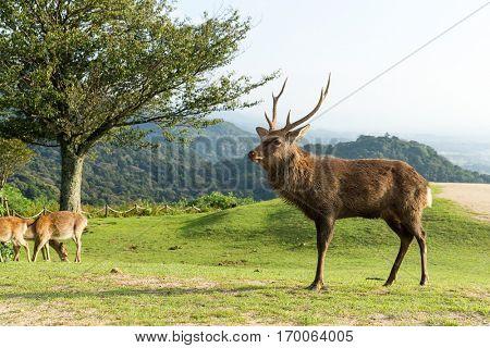 Deer and natural landscape