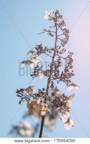 rust deadwod dry grass and spring blue sky