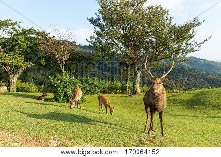 Group of Doe Deer