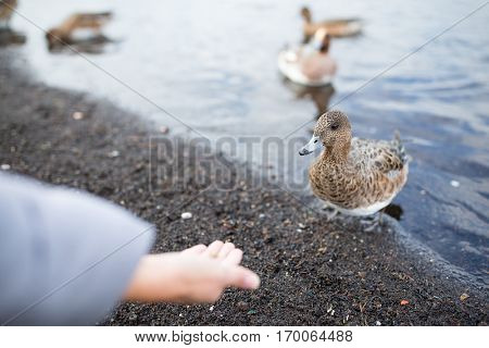 Woman feeding duck