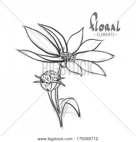 Wild flower on a white background with a place for an inscription for your creativity