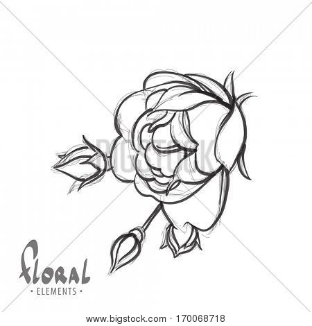 beautiful rose on a white background for your creativity