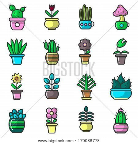 Plants and flowers in pots vector collection of sixteen elements on white. Vector poster of various types of cactus and blooming flowers with green stems and leaves that grow in houses on windows