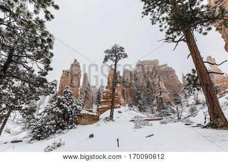 Snowy hoodoos and forest in Bryce Canyon National Park Southern Utah.