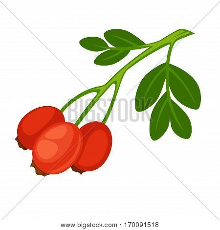 Rose hip fruit of rose plant isolated on white background. Rose haw or rose hep, typically red-to-orange color. Rosehips on branch with leaves realistic vector illustration in flat style design