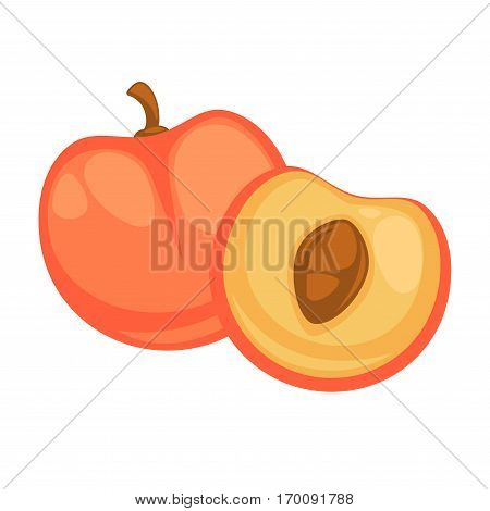Peach fruit isolated on white background. Nectarine whole and half tasty fruit with single seed. Yellow ripe tasty berry realistic vector illustration. Vegan cartoon fruit in flat style design