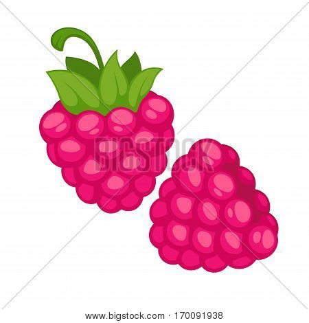 Pink raspberries realistic vector illustration. Healthy berries isolated on white background. Organic edible rough berry in cartoon style design. Ripe juicy raspberries with green leaves.