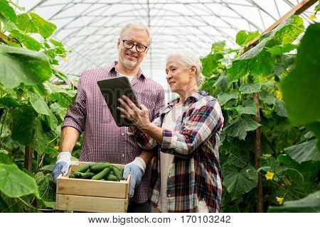 farming, gardening, agriculture, harvesting and people concept -happy senior couple with box of cucumbers and tablet pc computer at farm greenhouse