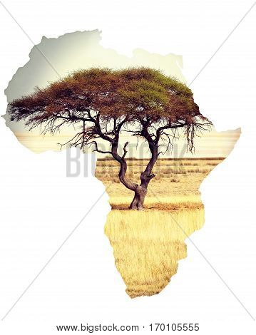 Map Of Africa Continent Concept With Acacia
