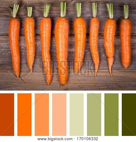 A row of trimmed fresh carrots on vintage style wood background. In a colour palette with complimentary colour swatches.