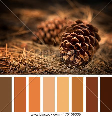 Fir cones on the forest floor with intentional shallow depth of field and vignetting. In a colour palette with complimentary colour swatches.