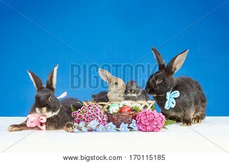 On a blue background bunnies near a basket with easter eggs decorated with flowers