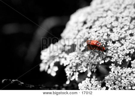 (Love)bugs Mating In B/w World