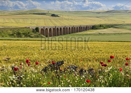 Spring rural landscape: railway bridge on the green wheat field.Apulia.ITALY .Rural landscape with vernal wildflowers: poppies in a field with unripe cornfield.