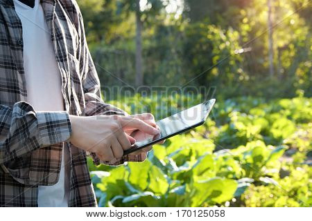 Farmer using digital tablet computer in cultivated agriculture Field modern technology application in agricultural growing activity selective focus and vintage tone.