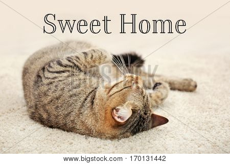 Cute tabby cat lying on carpet. Text SWEET HOME.