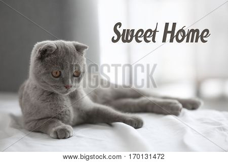 Cute cat lying on bed. Text SWEET HOME.