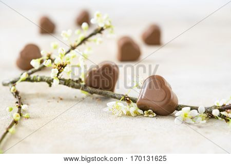 Chocolate pralines in heart shape and a blossom branch for valentine's or mothers day close up selected focus very narrow depth of field