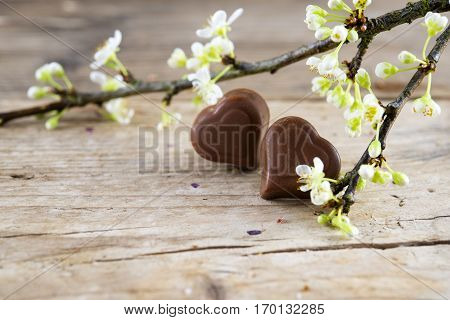 Two chocolate heart pralines a white blossoming branch on rustic wood for valentine's or mothers day close up selected focus narrow depth of field