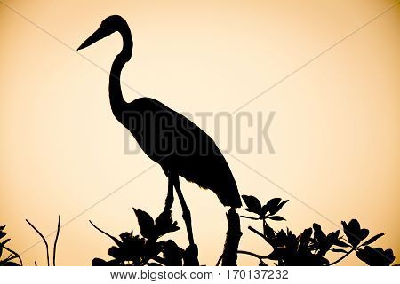 shadow of an egret perched on a tree in the sunset