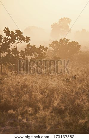 Warm and romantic Sunset on african savanna