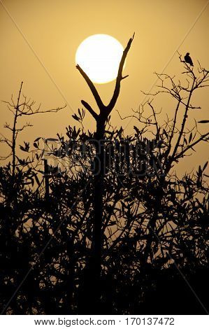 Silhouette of tree in the sunset in Sine Saloum delta, Senegal