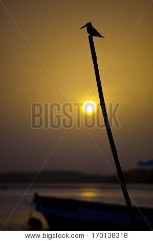 Silhouette of a kingfisher perched on a stick in the sunset Sine Saloum Senegal