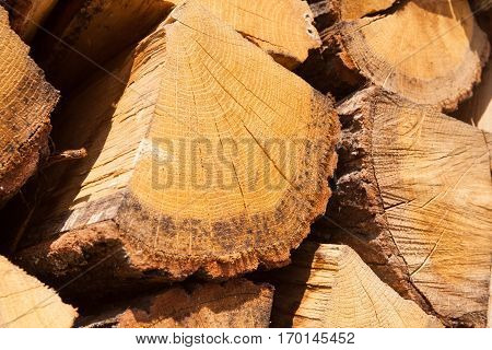 Close Up Shot Of A Pile Of Firewood Stacked Together