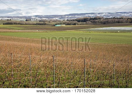 Autumn swiss landscape with vineyards and green field with Jura mountain in the background