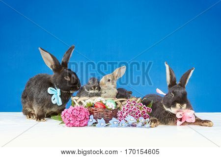 Large rabbits with bows and little rabbits in a basket near the flowers and Easter eggs