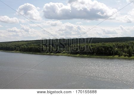 Birch forest across the river in Siberia.