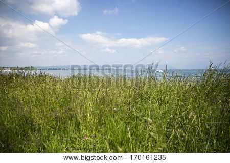 View of the Geneva lake - lac Leman - from a green meadow