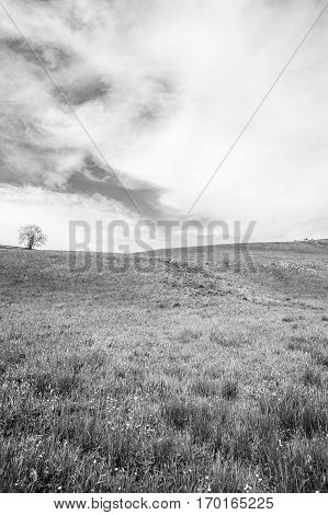 Black and white landscape of Jura mountain with blooming green meadow Switzerland