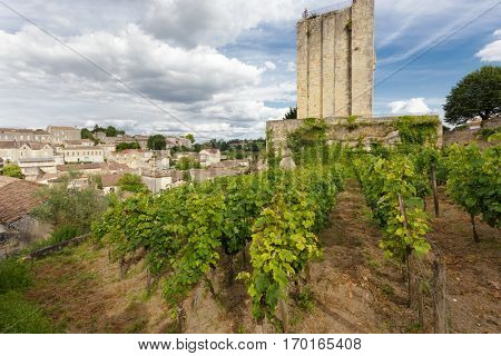 Vineyard in the Saint Emilion village near an old medieval tower, France